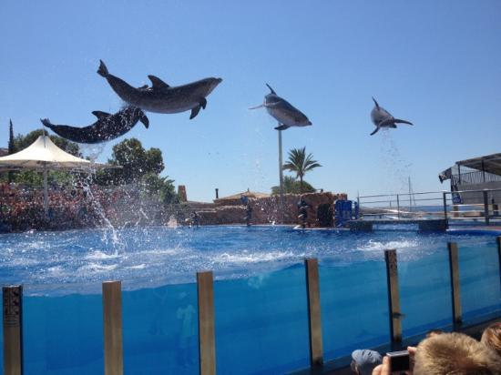 Calvià, España: espectaculo de delfines