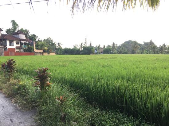 Saka Village Resort Ubud