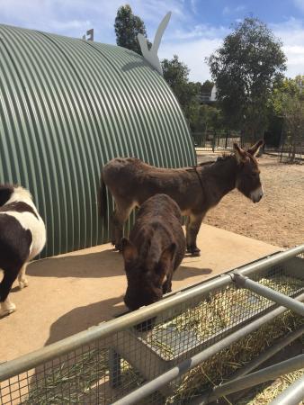 Byford, Αυστραλία: photo9.jpg