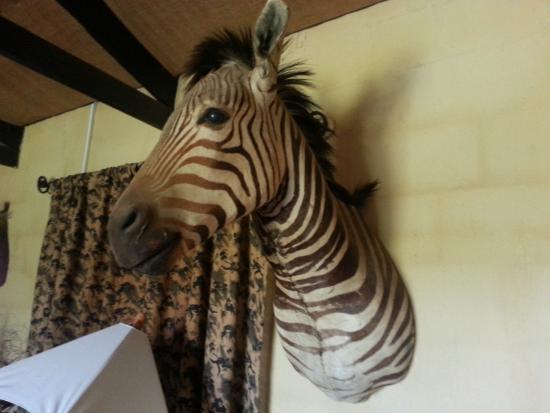 Addo, Sudáfrica: Deko