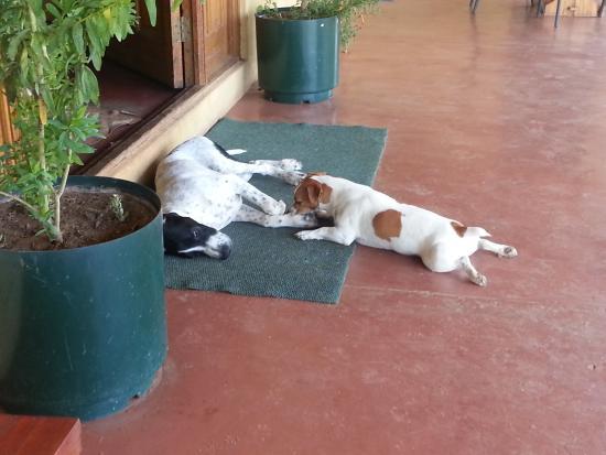 Addo, Sydafrika: die Pointer-Hunde der Familie
