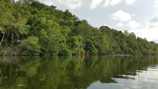 Brunei Proboscis Monkey River Safari : 20160501_171353_large.jpg