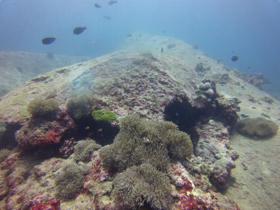 Kamala, Tailandia: Can you find Nemo??!