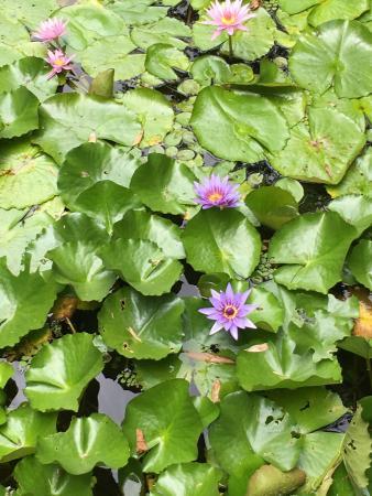 Jardin de Balata: Magnifique visite , fleurs , végétation , parc bien aménagé