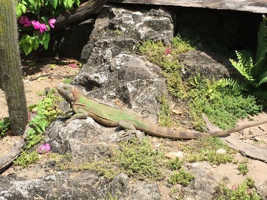 Le Carbet, Martinik: photo5.jpg