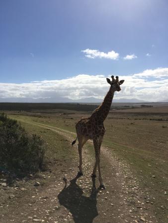 Albertina, Afrika Selatan: photo5.jpg
