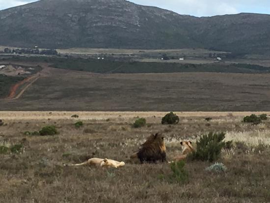 Albertina, Afrika Selatan: photo6.jpg