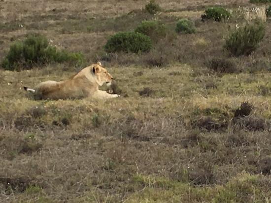Albertina, Afrika Selatan: photo7.jpg