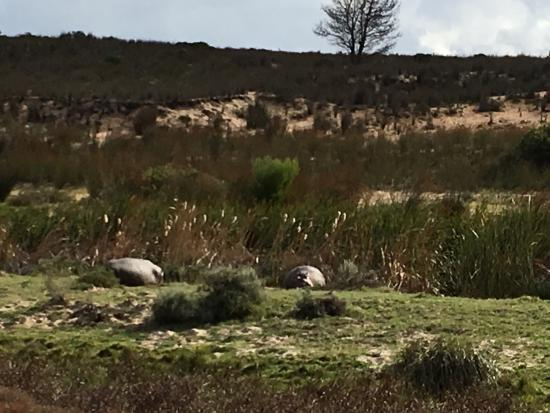 Albertina, Afrika Selatan: photo8.jpg