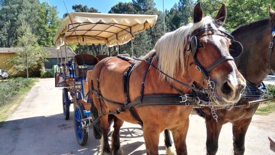 Saint-Saturnin-les-Apt, Fransa: The Horses