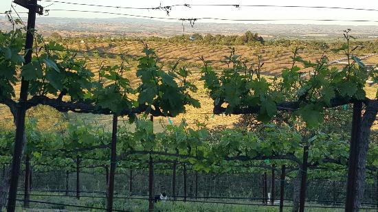 Seven Quails Vineyards Bed & Breakfast Picture