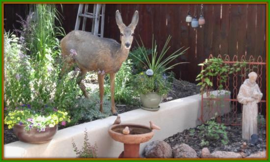Cascade, CO: Wildlife visiting the inn.