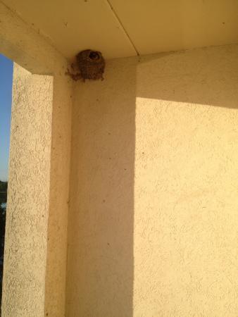 Grand Island, NY: nest in balcony