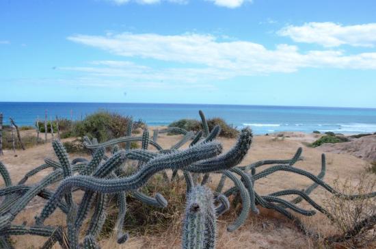 Cabo Pulmo Beach Resort: Natural surroundings