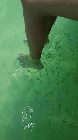 The lagoon picture of kanlum lagoon tulum tripadvisor for Fish pedicures near me