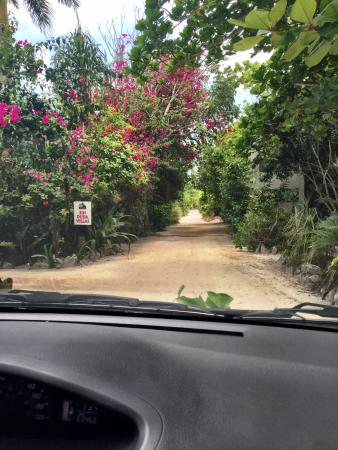 Sin Duda Villas : Driving through the arch of trees/flowers at the entrance to Sin Duda