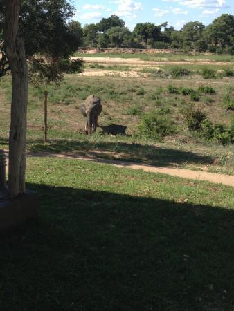Umkumbe Safari Lodge: Vista de um elefante do quarto do hotel