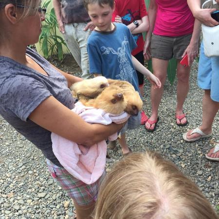 Dominical, Kosta Rika: Baby sloths!