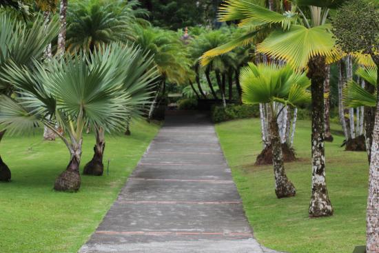 Jardin de Balata: un des sentiers à arpenter