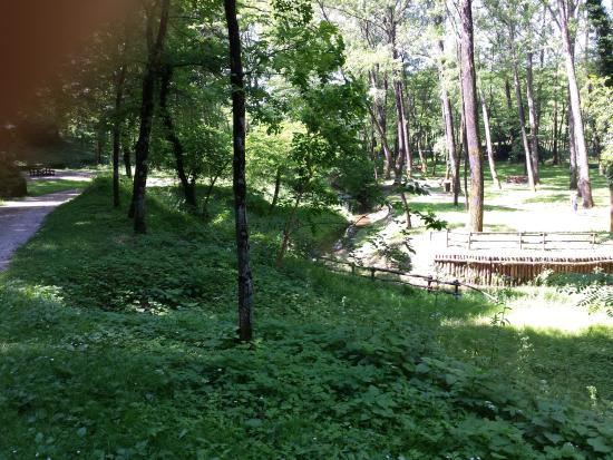 Friuli Venezia Giulia, إيطاليا: Vista del bosco