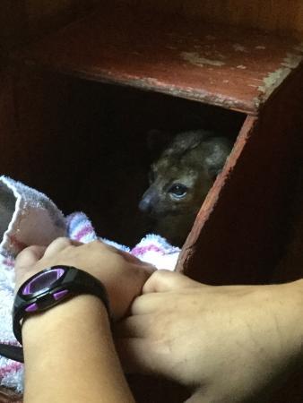 Wildlife Learning Center: photo3.jpg