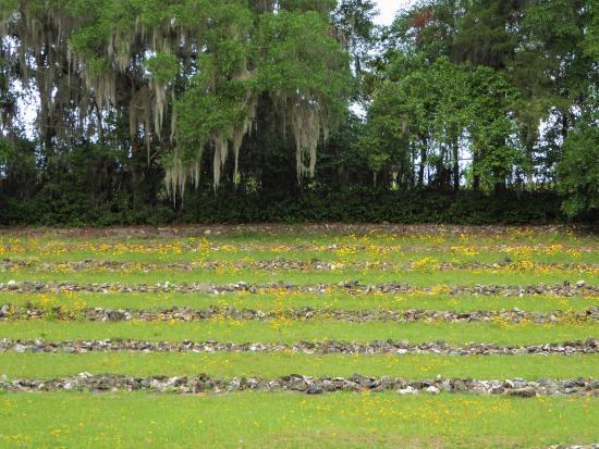 Palatka, Flórida: Flowered amphitheater
