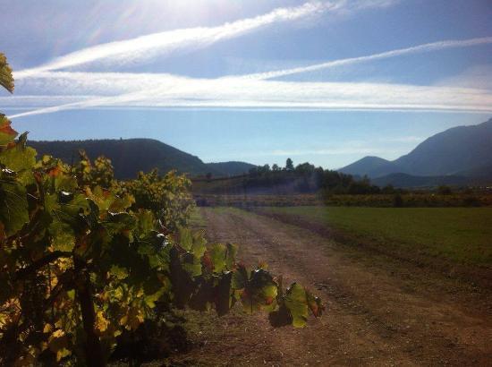 Corinthia Region, กรีซ: Vineyards in Nemea Wine regio
