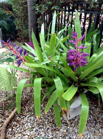 The Fountain Condominium Hotel : Lovely flowers outside the condo