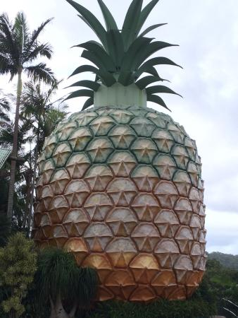 Big Pineapple: photo0.jpg