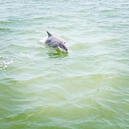 Img 20160501 154407 Large Jpg Picture Of Dolphin Watch Nature Tour