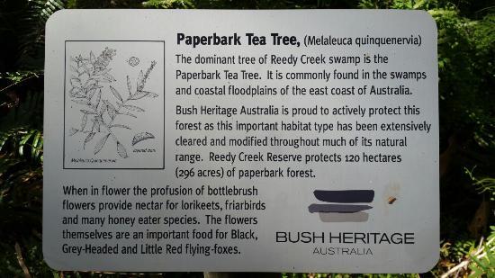 Paperbark tree information - Picture of Paperbark Forest Walk, Agnes Water  - Tripadvisor