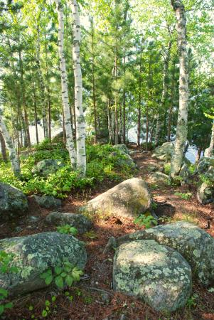 Ely, MN: path from cabin to the shore