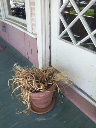 The Pink House: First photo is the front door entrance and the second is a dead plant on the front porch.