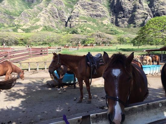 Kaneohe, HI: The horses were sweet