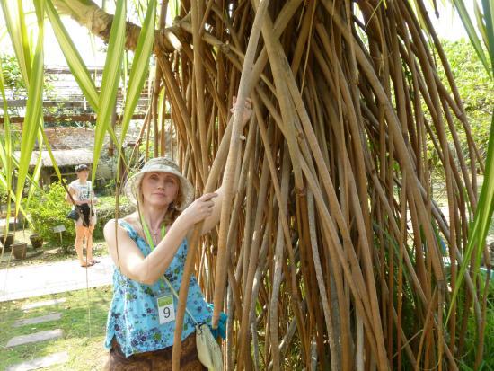 Herb Garden Pattaya: В ПАРКЕ