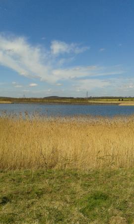 Riverside Walk - Picture of RSPB Fairburn Ings nature