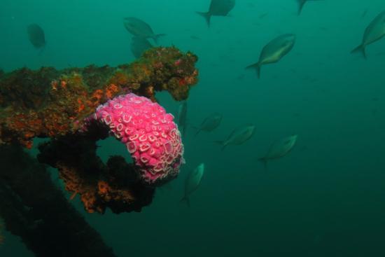 Tutukaka, Yeni Zelanda: Wreck of the Waikato cool Dive