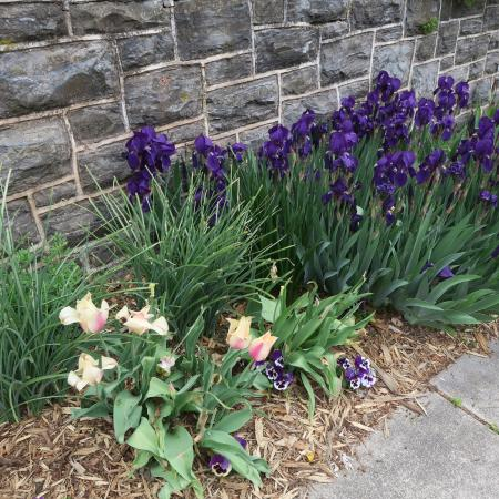 Amethyst Inn & Cottages: Pretty flowers line the sidewalk.