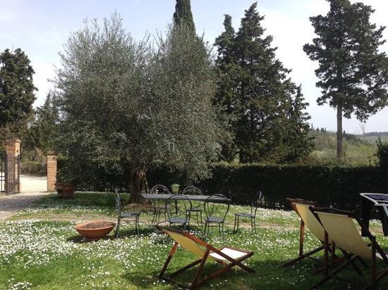 Montespertoli, İtalya: Olive trees