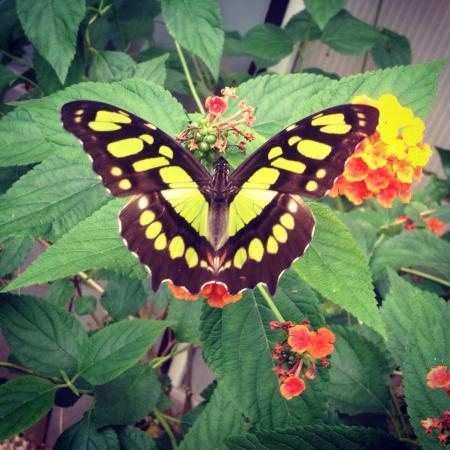 Ross-on-Wye, UK: Loved it! Beautiful butterflies 💕