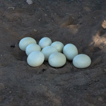 Oudtshoorn Εικόνα
