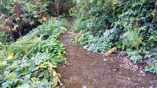 overgrown-path.jpg
