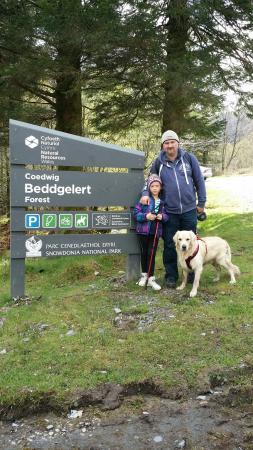 Beddgelert Forest: 20160430_144512_large.jpg