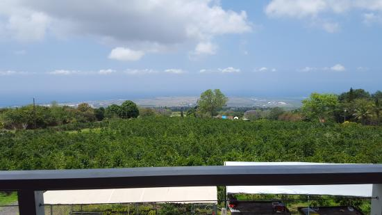 Holualoa, HI: View from the back deck, looking across at the valley and coastline.