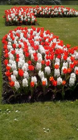 Disley, UK: Flowers