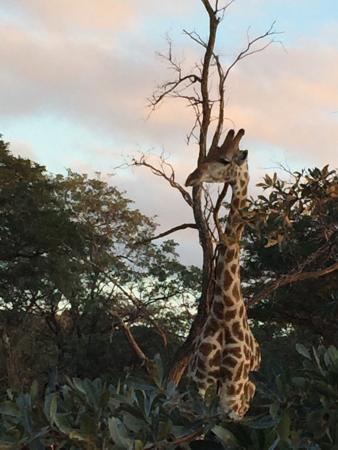 Bulge River, Sydafrika: Wild Ivory Eco lodge
