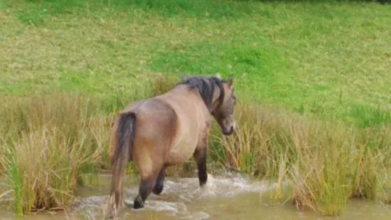 Perdepoort Horse Tails Foto