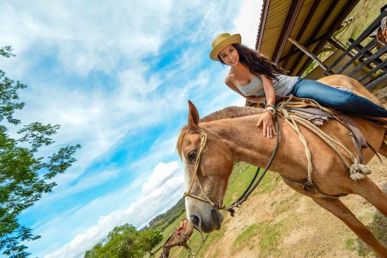 Rincon de La Vieja, Kosta Rika: Healthy horses