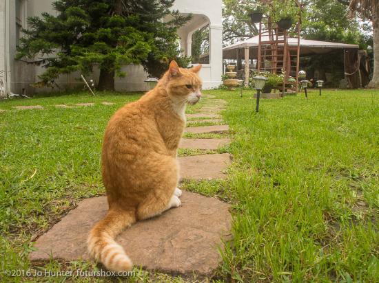 Avenue O Bed and Breakfast: Rusty Cat in the garden, with B&B in the background