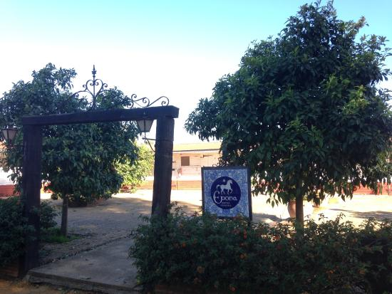 Carmona, Spanyol: Lovely area next to the arena